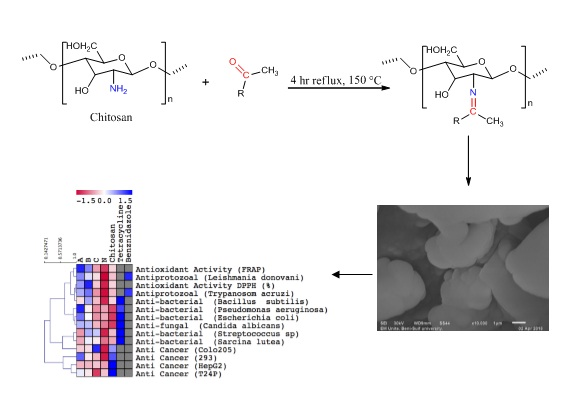 Synthesis, Characterization and Biological Activity of Schiff Bases Based on Chitosan and Acetophenone Derivatives