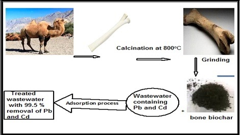 Adsorption of Cd(II) and Pb(II) Using Physically Pretreated Camel Bone Biochar