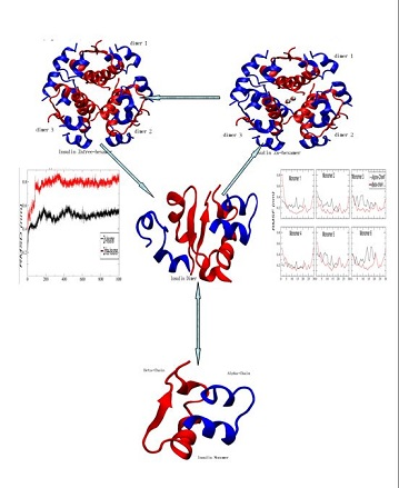 Explicit Solvent Molecular Dynamics Simulation Studies of the Dissociation of Human Insulin Hexamer into the Dimeric Units
