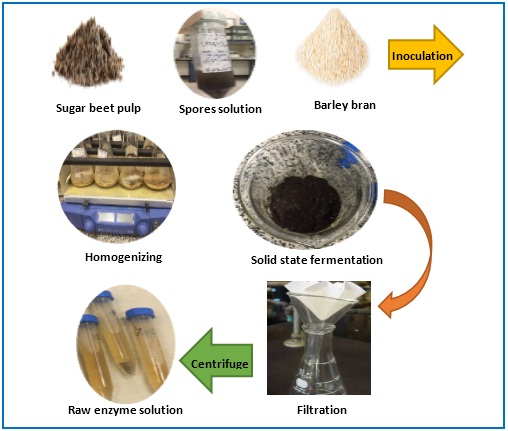 Polygalacturonase Production by Aspergillus Niger Solid State Fermentation on Barley Bran and Sugar Beet Pulp Mixture